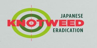 Japanese Knotweed Eradication